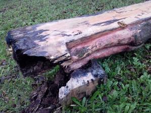 Zobrazit detail akce: Léto-kružní kříž rozežrala houba, nahradí ho plastika