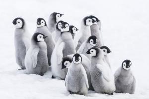 Zobrazit detail akce: Putování tučňáků: Volání oceánu (filmový klub pro seniory)