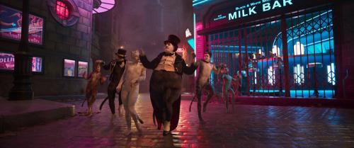 Zobrazit detail akce: Dámská párty s Kočkami. Cats (Kočky)